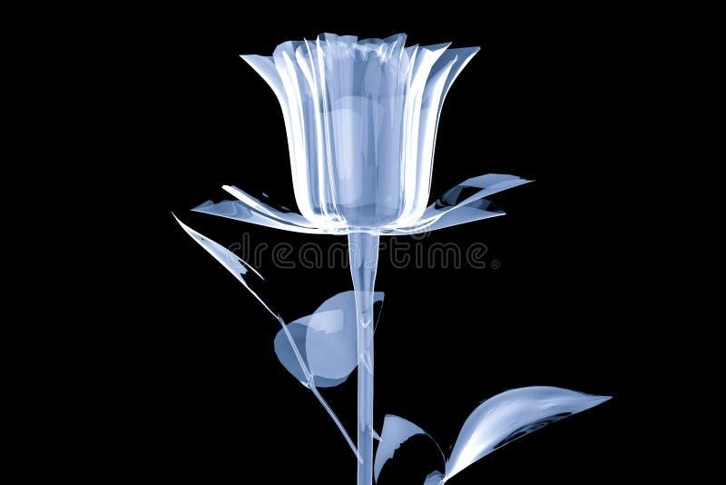 Vit glass kristallros som isoleras på svart bakgrund royaltyfri illustrationer