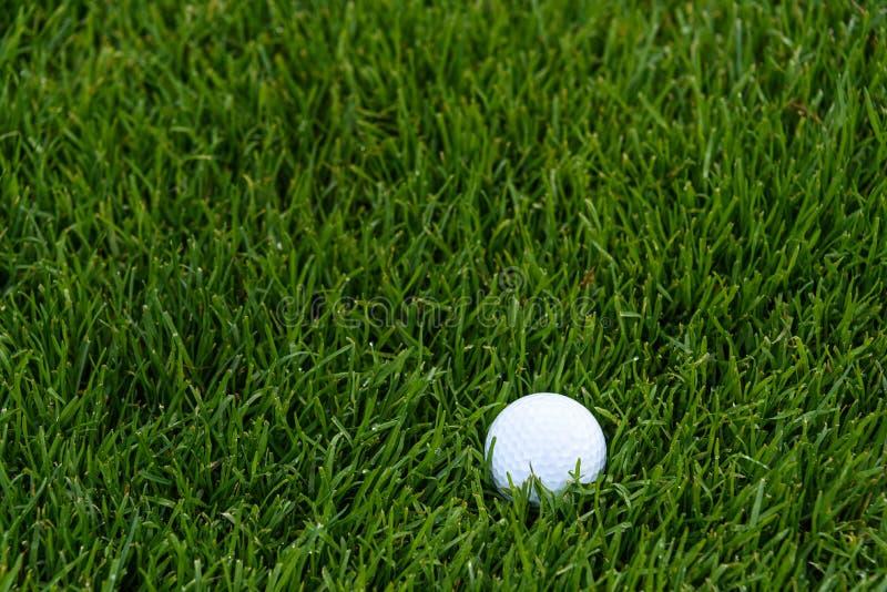 Vit golfboll djupt i det högväxta gräset av busen, ottadagg på gräset arkivbild
