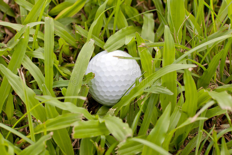 Vit golfbolldroppe i skurkrollbuse arkivfoton