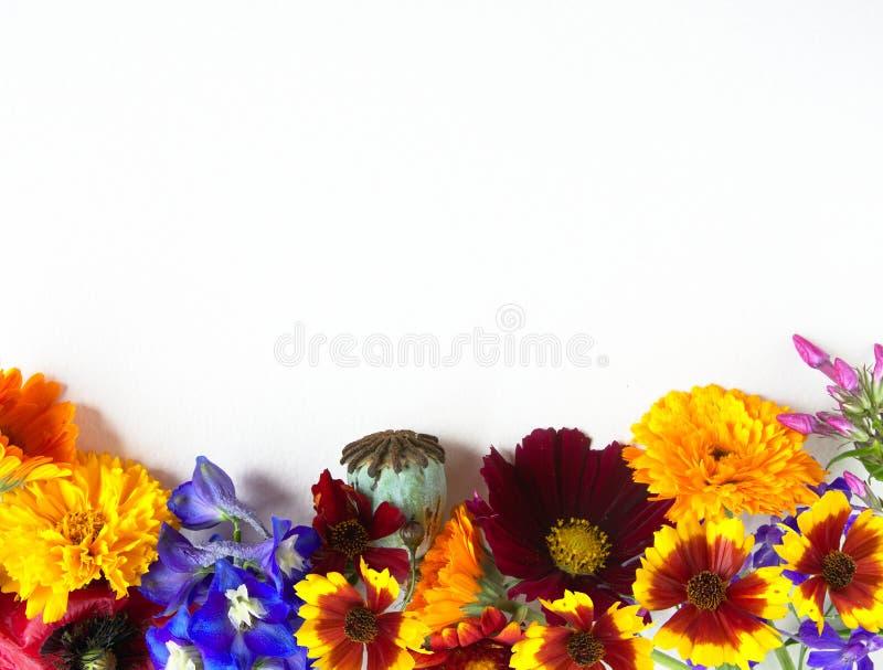 Vit grungy pappers- bakgrund med en grupp av ljusa mångfärgade trädgårdblommor arkivfoton