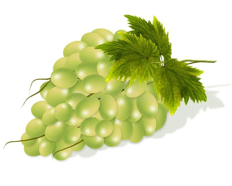 Vit grupp per gruppen av vita druvor royaltyfri illustrationer