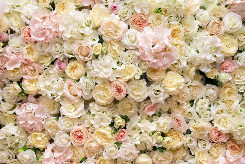 Vit gul rosa rosbakgrund arkivfoto