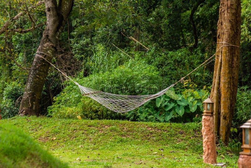 Vit hängmatta som hänger mellan träd ovanför gräsmattan i mitt av trädgården royaltyfria foton