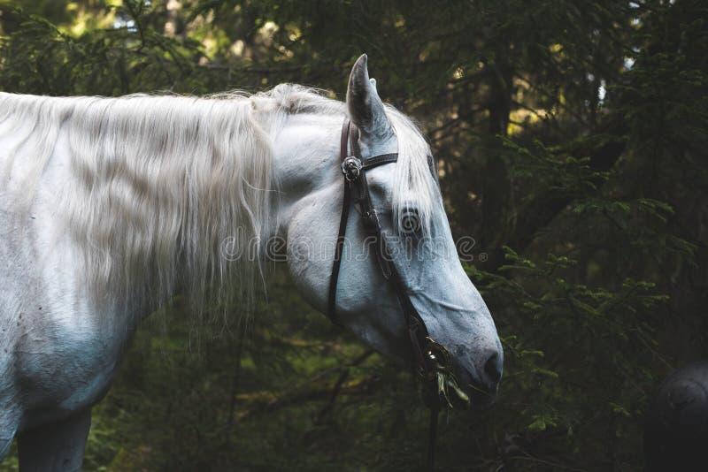 Vit häst djupt i skogen arkivfoto