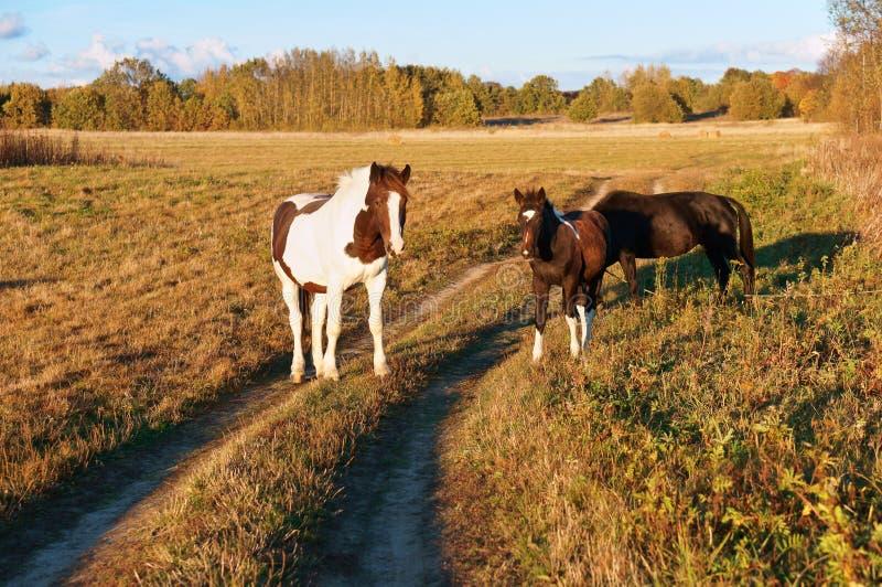 Vit häst med röda fläckar, häst och föl arkivfoton