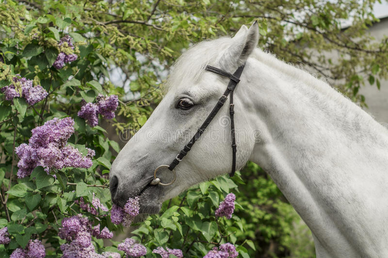 vit häst på buskebakgrunden arkivbilder