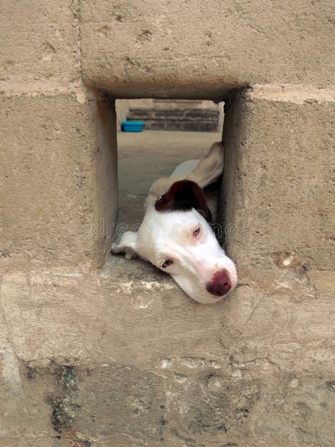 Vit hund royaltyfri fotografi