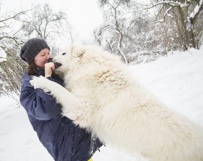 Vit hund för kvinnadrev i vinterskog royaltyfri bild