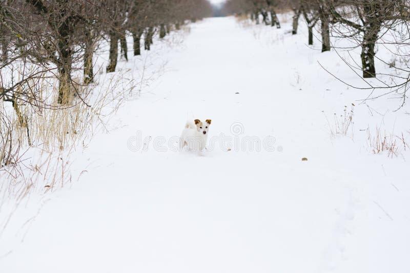 Vit hund i wintergardenen fotografering för bildbyråer