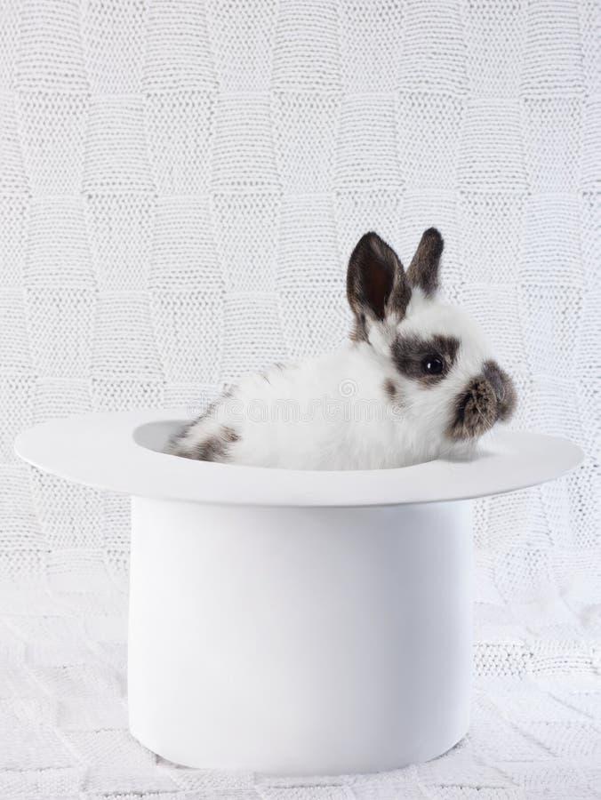 Vit kanin i en vit hatt arkivfoto