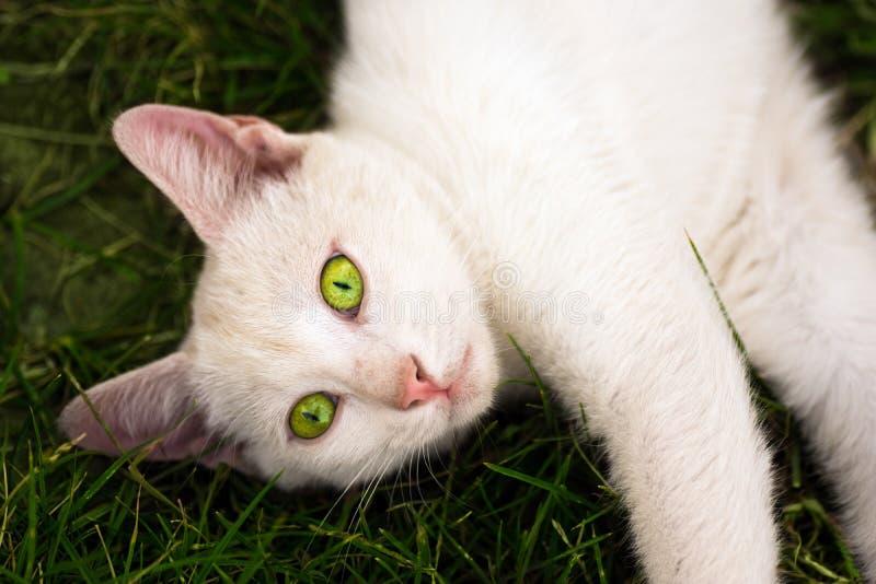 Vit katt i gräs royaltyfri bild