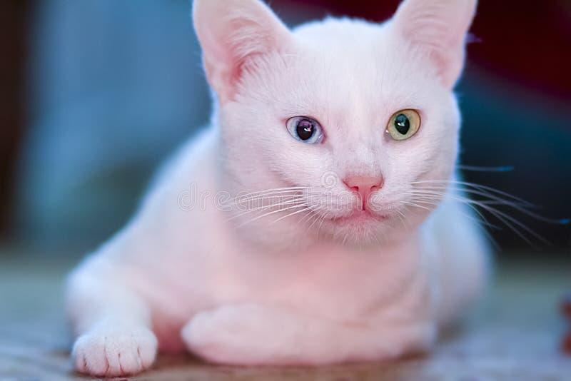 Vit katt med olika gaser arkivfoto