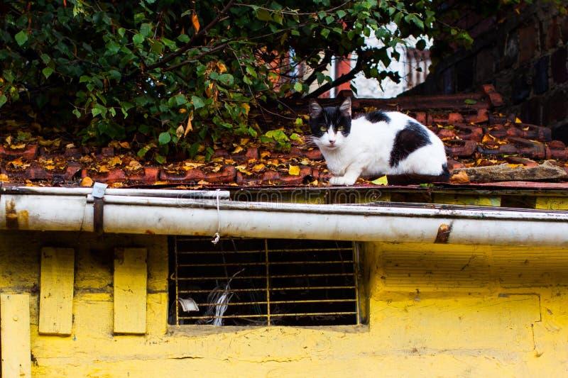 Vit katt med svarta fläckar som sitter på taket royaltyfri bild