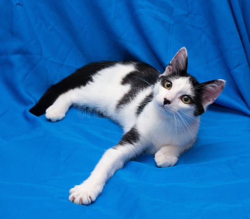 Vit katt med tonåringen för svarta fläckar som ligger på blå bakgrund arkivbilder