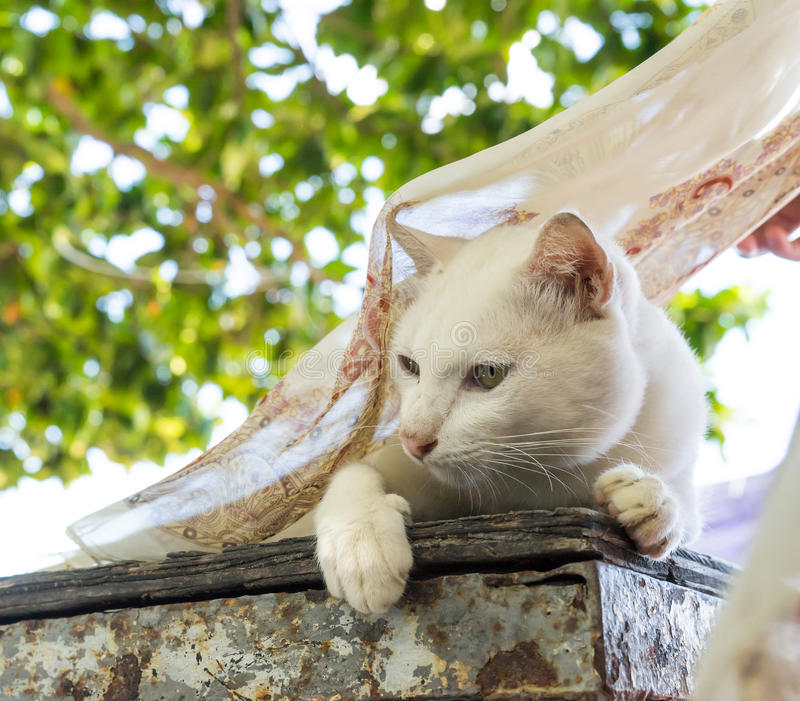 Vit katt på tabellen med klipsk halsduk 1 arkivfoto