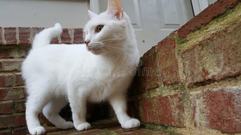 Vit katt som ser i väg från kamera arkivfoto