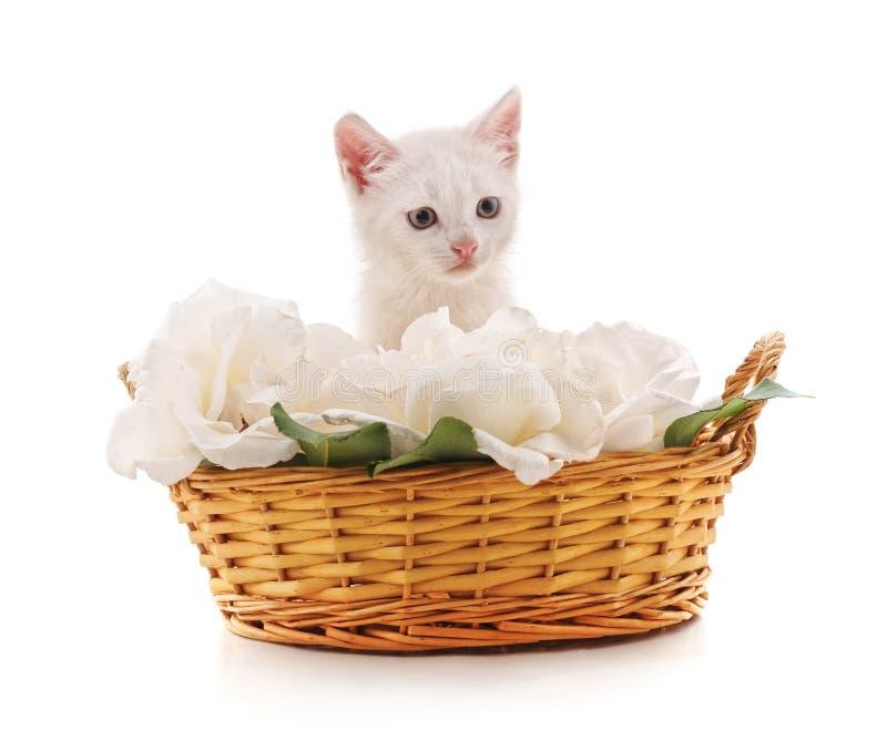 Vit kattunge i en korg med blommor arkivbilder