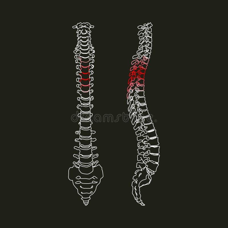Vit kontur av den mänskliga ryggen på den svarta bakgrundsvektorillustrationen stock illustrationer
