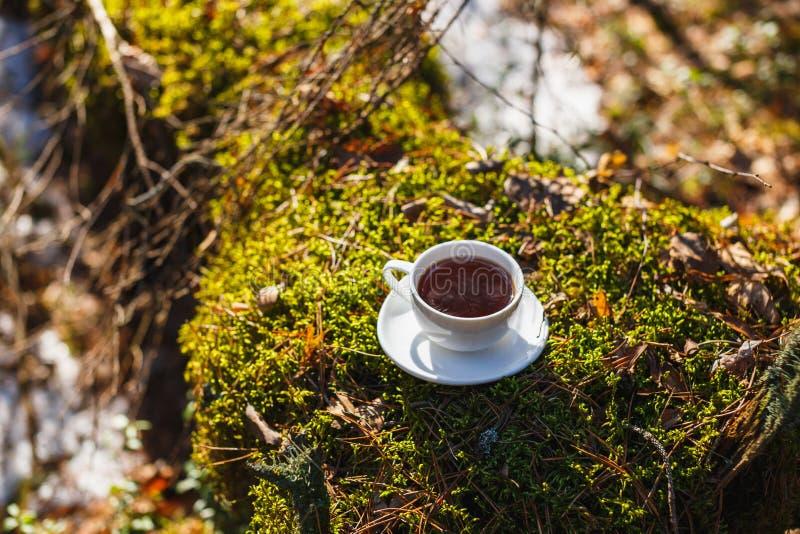 Vit kopp med te på ett tefat i den soliga skogen arkivfoton