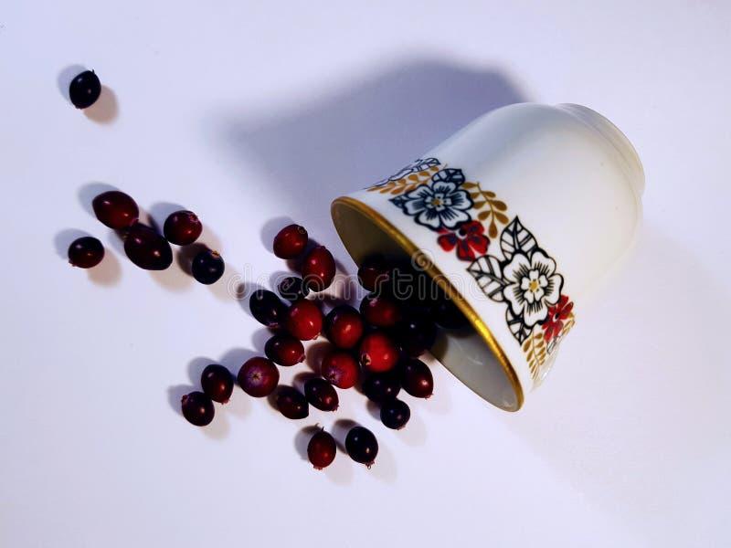 Vit kopp på en vit bakgrund royaltyfria bilder