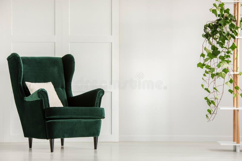 Vit kudde på fåtöljen för smaragdgräsplan i inre murgröna för stilfull vardagsrum i kruka på hylla royaltyfri fotografi