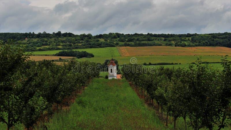 Vit kyrka i mitt av fält och fruktträd arkivfoton
