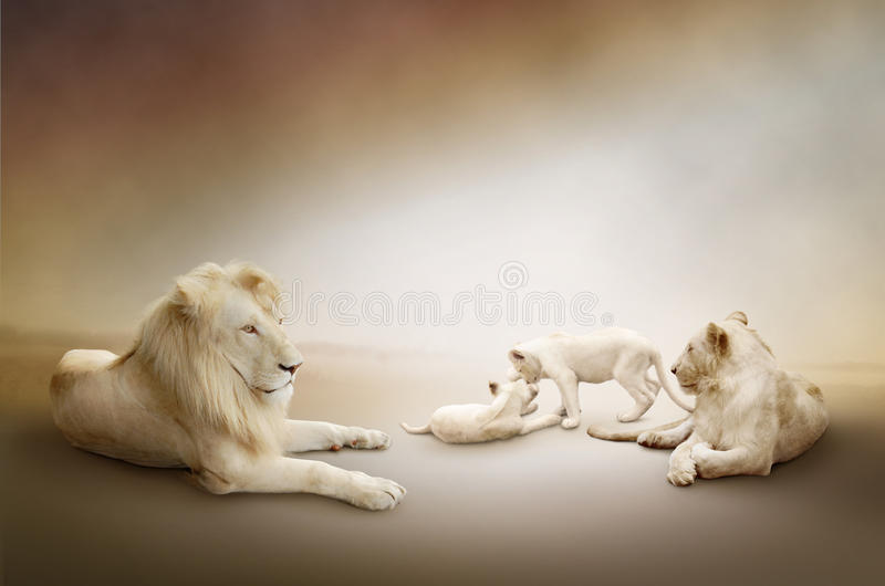 Vit lionfamilj royaltyfri foto