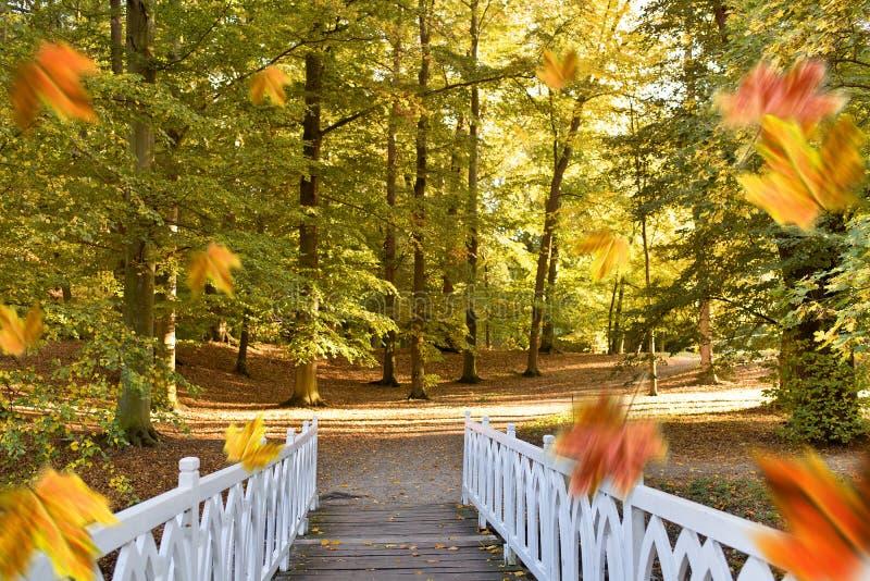 Vit liten bro i parkera royaltyfri fotografi