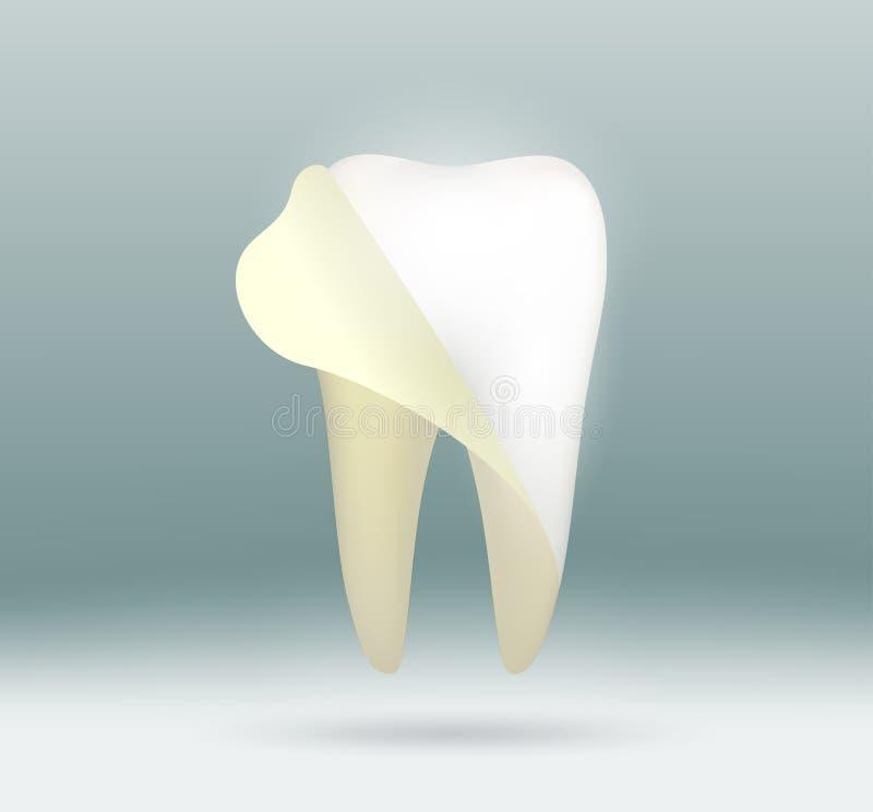 Vit mänsklig tand royaltyfri illustrationer