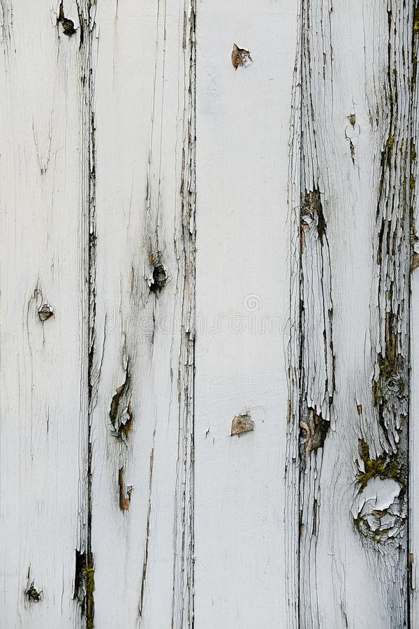 Vit målade trästaketbakgrund med massor av textur och modeller i det wood kornet royaltyfri foto