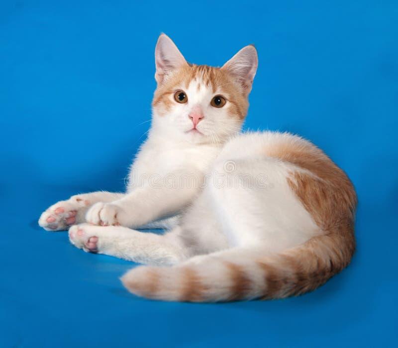 Vit och röd kattunge som ligger på blått arkivfoto