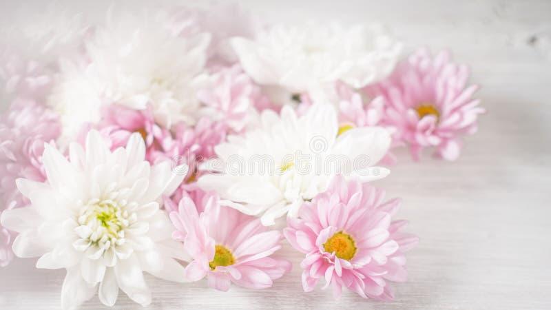 Vit och rosa färgen blommar på den horisontalvita bakgrunden arkivbilder