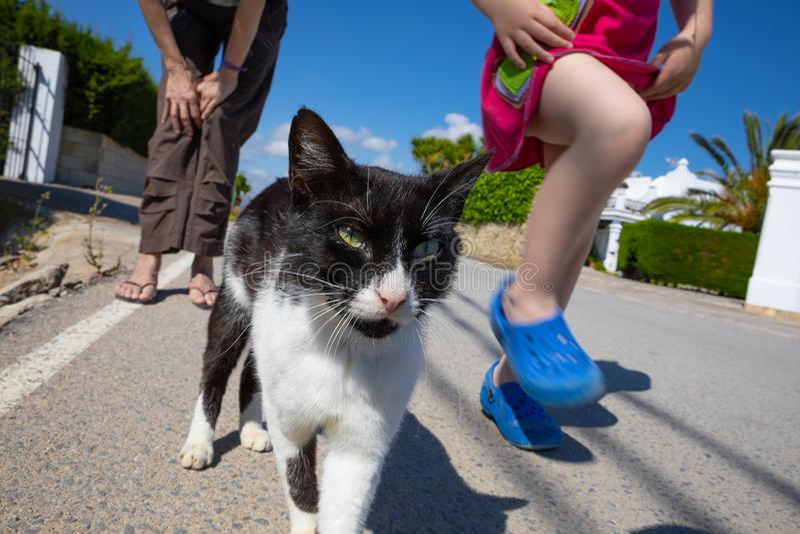 Vit och svart katt som går med lilla flickan och kvinnan royaltyfria bilder