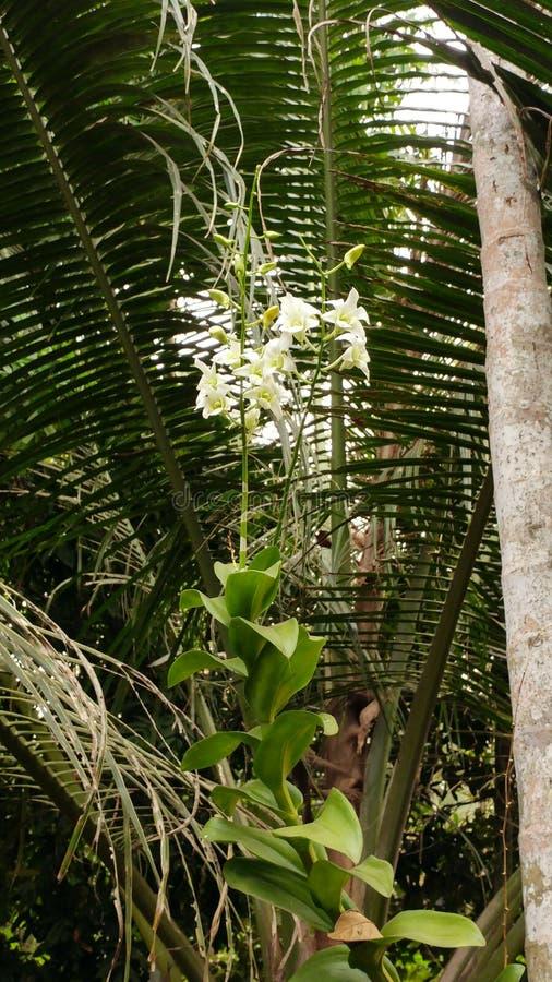 Vit orkidé arkivfoto