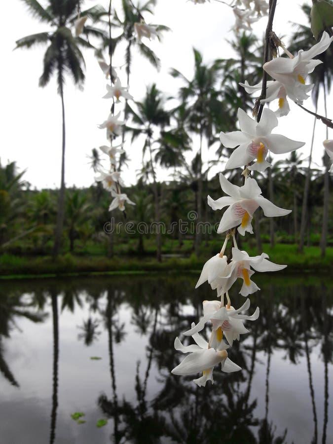 Vit orkidé i spegelvatten royaltyfri bild