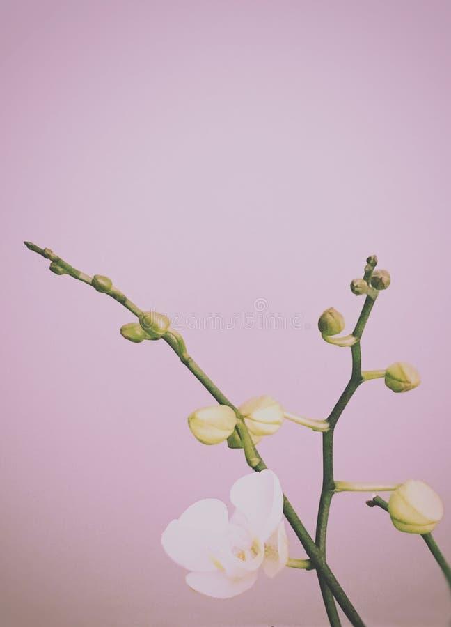 Vit orkidé i vårtid royaltyfri bild