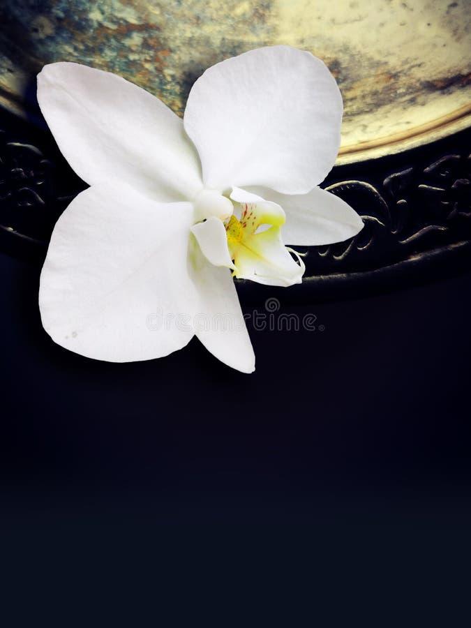 Vit orkidé på en mörk bakgrund arkivbilder