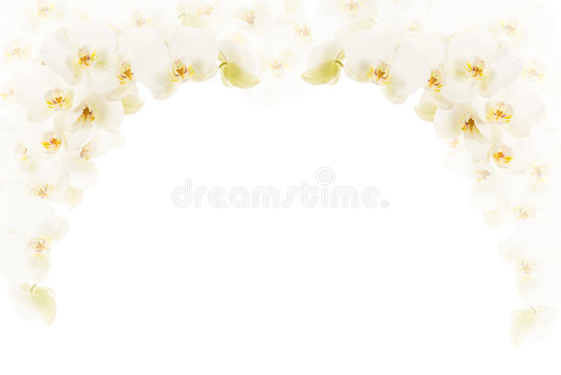 Vit orkidéram arkivfoton