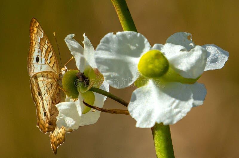 Vit p?f?gelfj?ril p? den l?sa vita blomman arkivbild