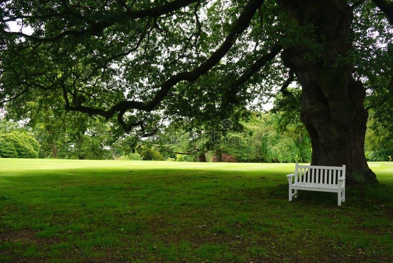 Vit parkerar bänken i skuggan av ett stort träd royaltyfri bild