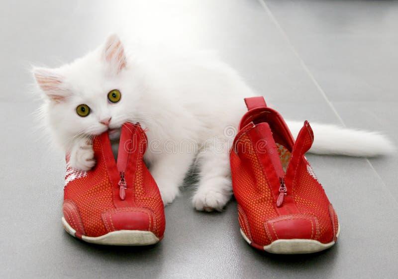 Vit persisk kattunge som spelar med röda skor royaltyfria foton