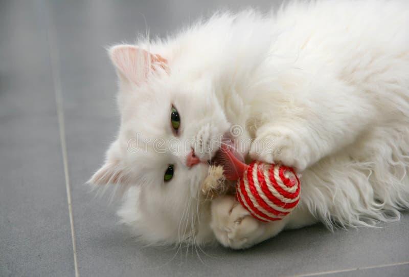 Vit persisk kittenplaying med leksaken arkivbild
