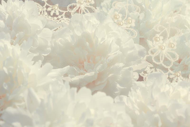 Vit pionblommabakgrund arkivbilder