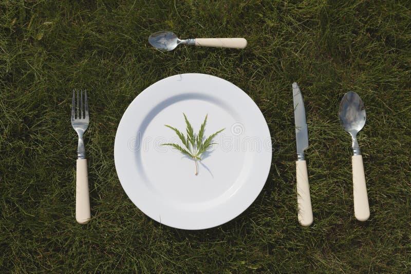 Vit platta på gräs arkivfoton