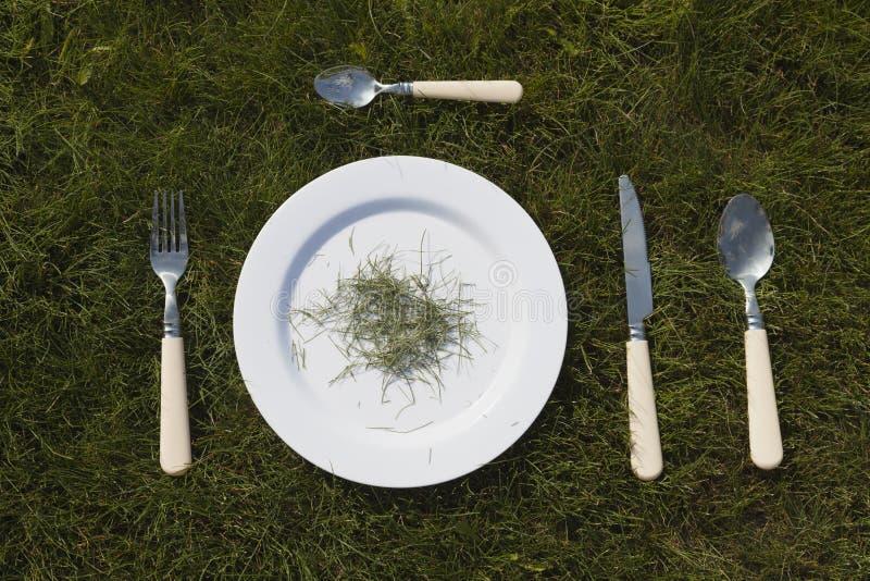 Vit platta på gräs royaltyfri bild