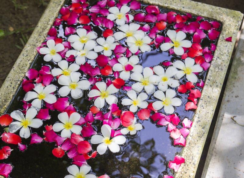 Vit Plumeria och rosor som svävar på vatten arkivbilder