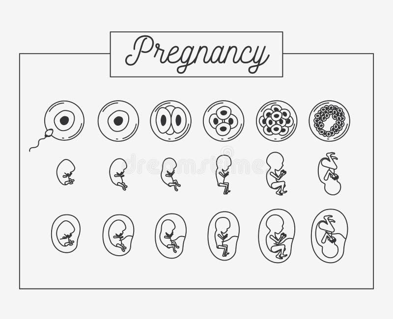 Vit process för havandeskap för bakgrundskonturuppsättning i rectagular ram vektor illustrationer