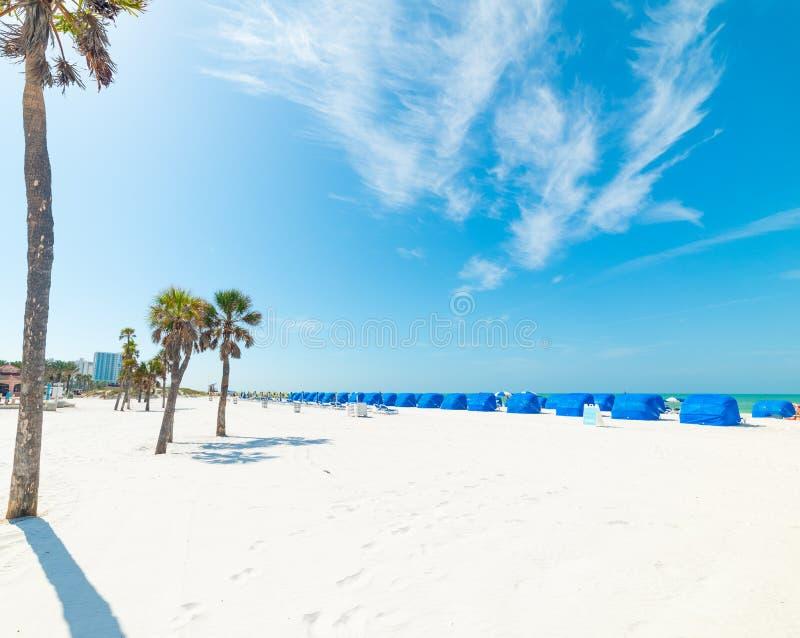 Vit sand- och palmträd i Clearwater-kusten arkivbild