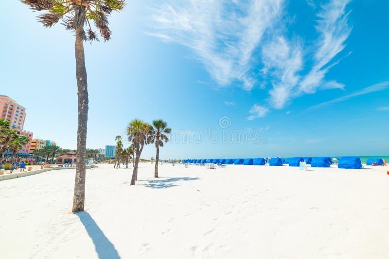 Vit sand- och palmträd på Clearwater-stranden arkivfoton