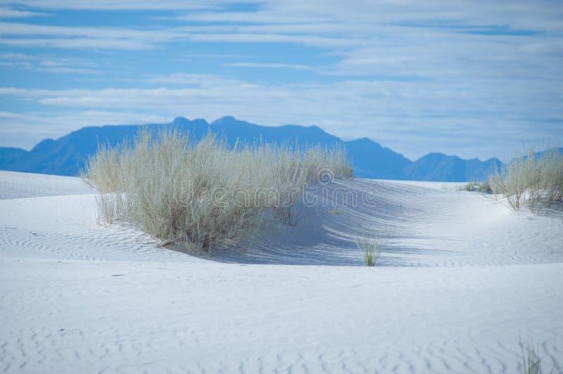 Vit sandpapprar den nationella monumentet med växter arkivfoton